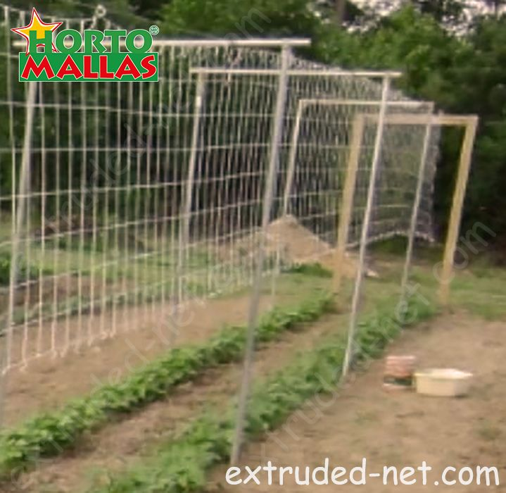 Trellis net from the sown sown early of the crops.