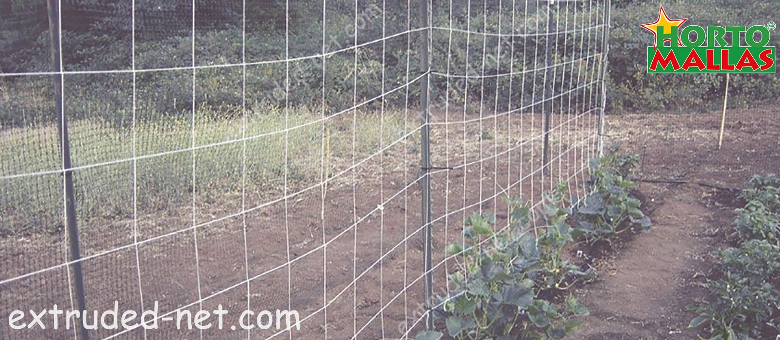 tutoring of the cucumber crops with Trellis net