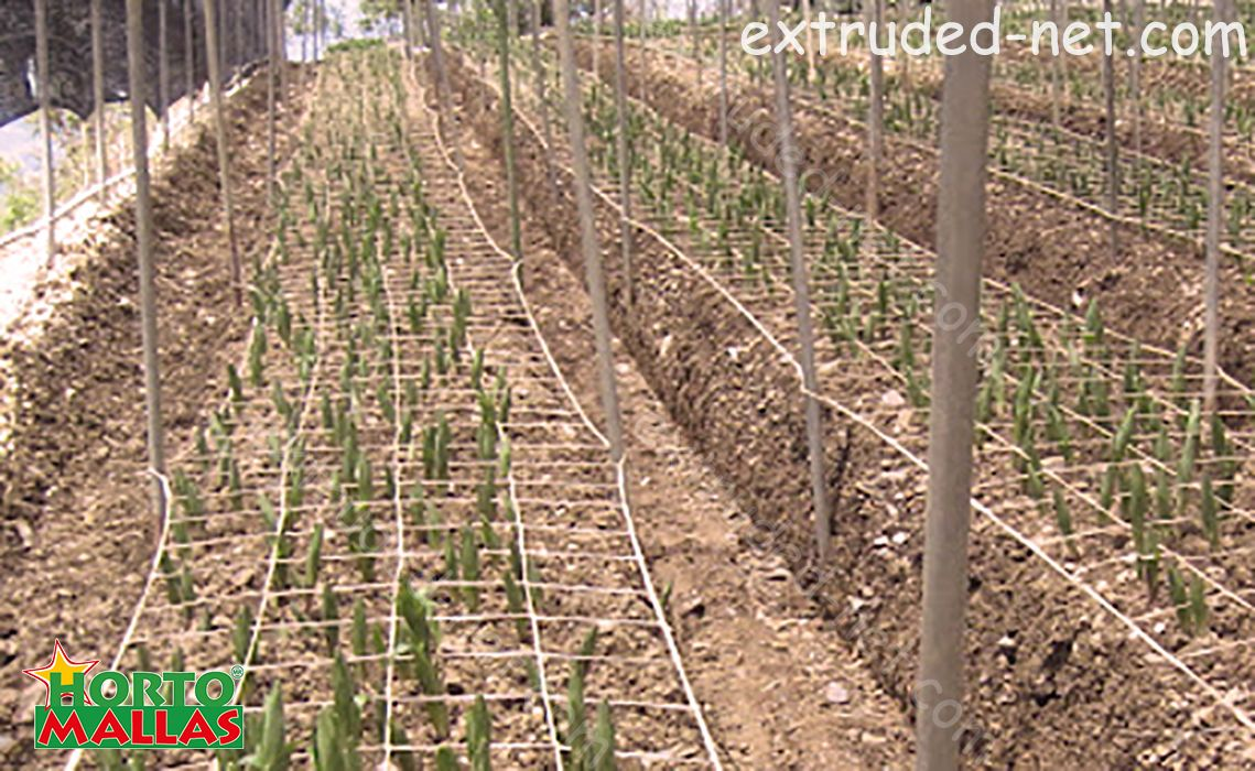 Protection and tutoring of crops with Trellis net