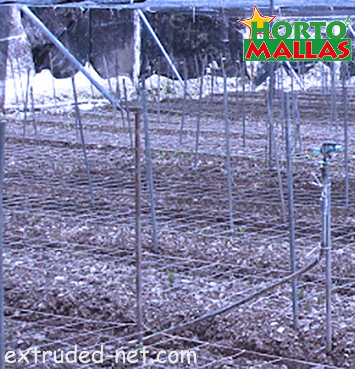 Trellis net for the protection of seeds of crops
