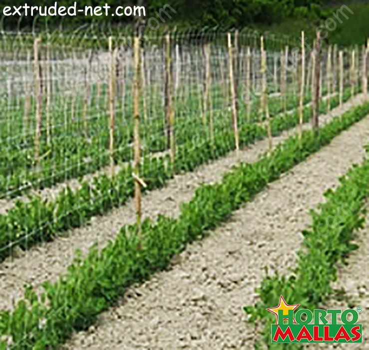 Trellis net vertical for the tutoring crops in garden