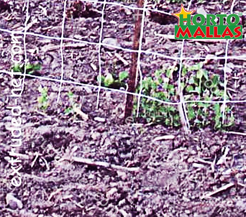 espalier net for the care and growth of the plants and crops on the garden