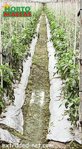 Extruded net on the protection and tutoring of the crops