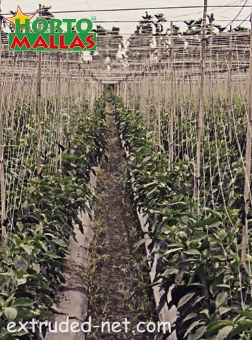 Trellis net for the good tutoring of the crops