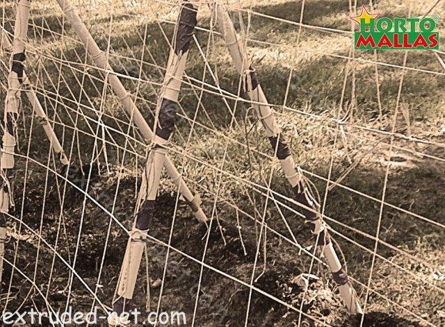 Trellis net installed on the garden