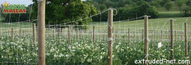extruded net on the tutoration of the  crops of beans
